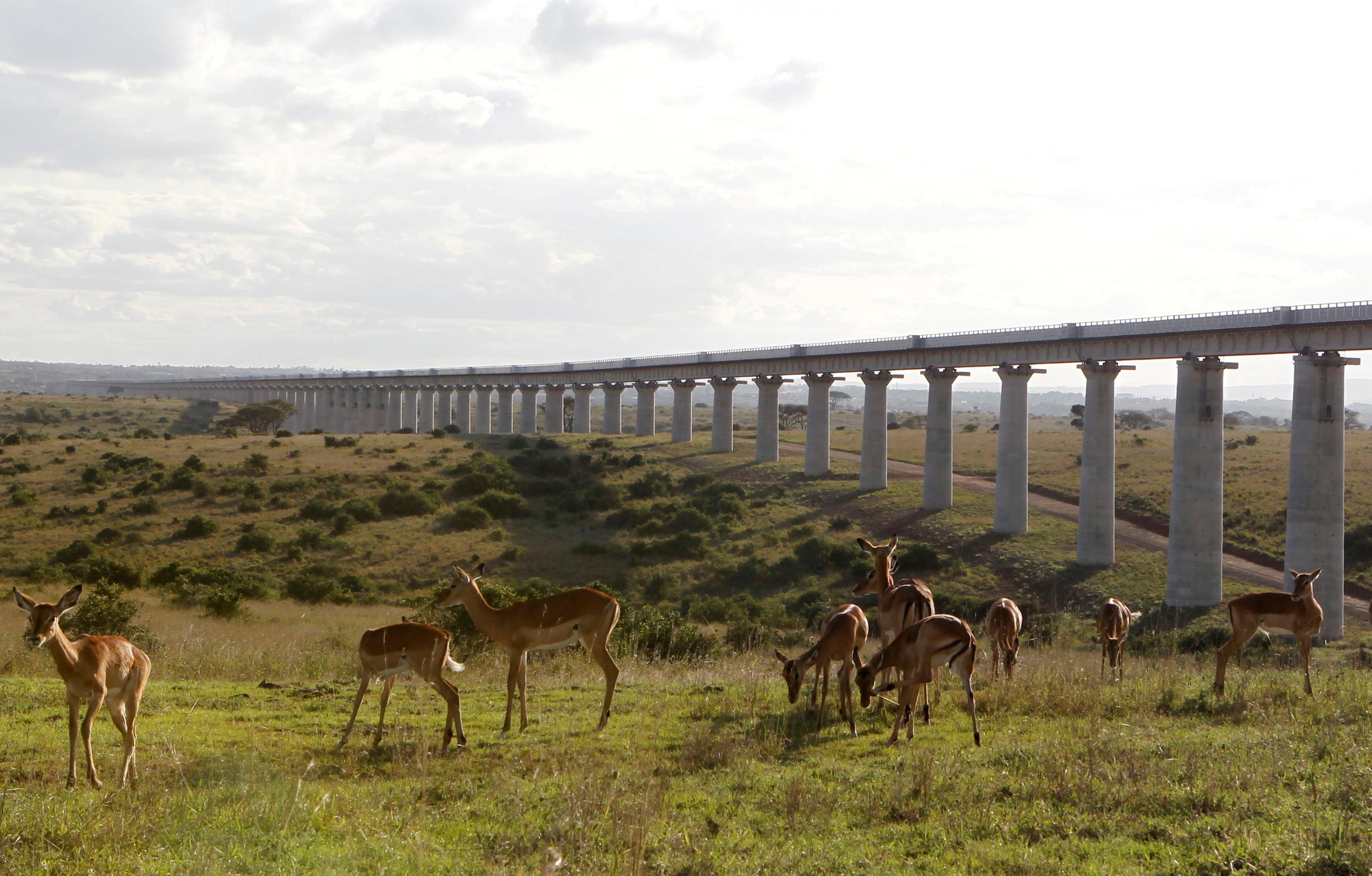 A group of impala graze near the elevated railway line that allows movement of animals below the Standard Gauge Railway (SGR) line linking Nairobi and Naivasha inside the Nairobi national park in Nairobi, Kenya October 16, 2019. REUTERS/Njeri Mwangi/File Photo