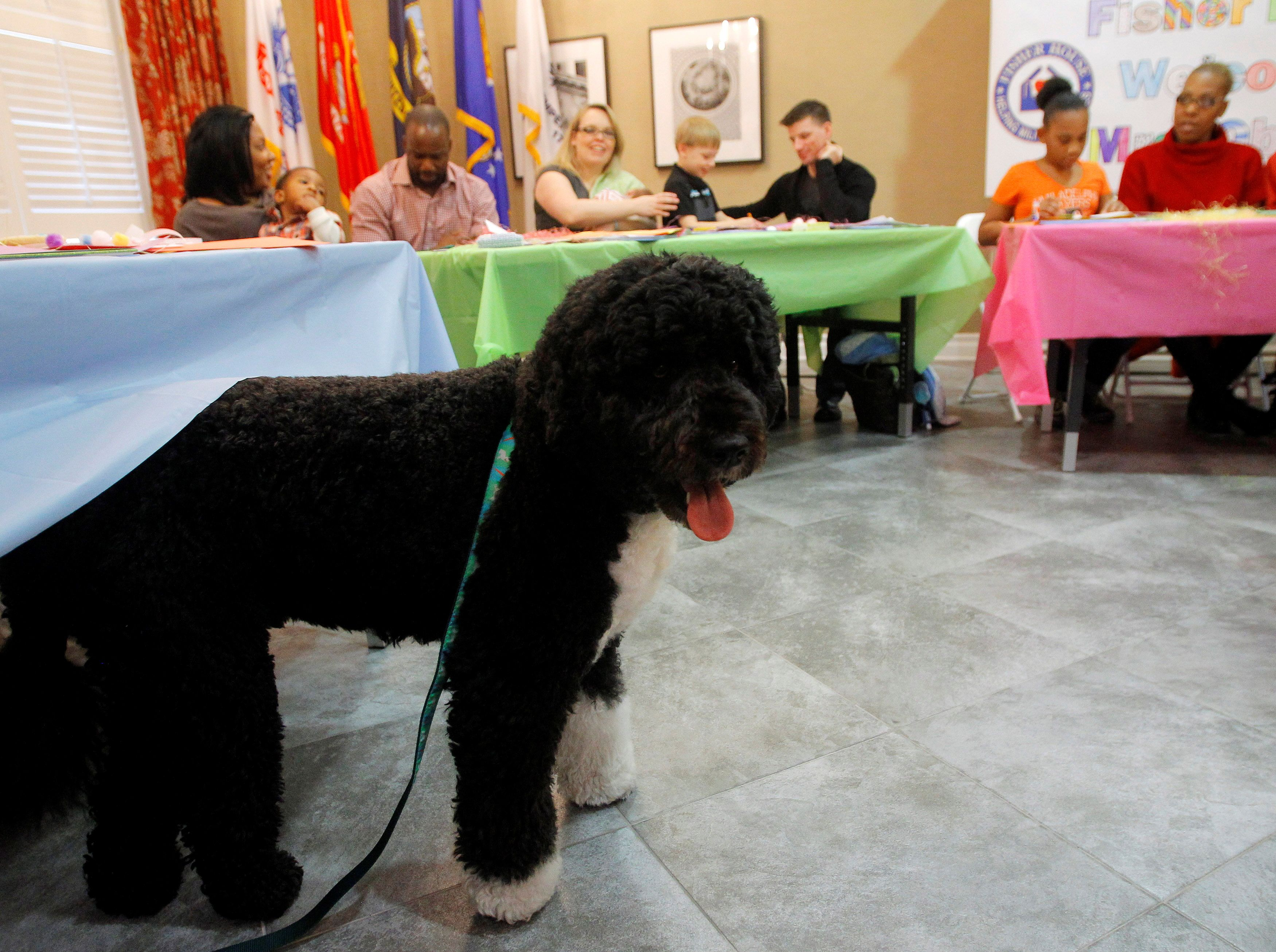 First dog Bo sneaks away under a table from U.S. First lady Michelle Obama (not pictured) while visiting military families before Easter at Fisher House in Bethesda, Maryland March 20, 2013.    REUTERS/Gary Cameron/File Photo