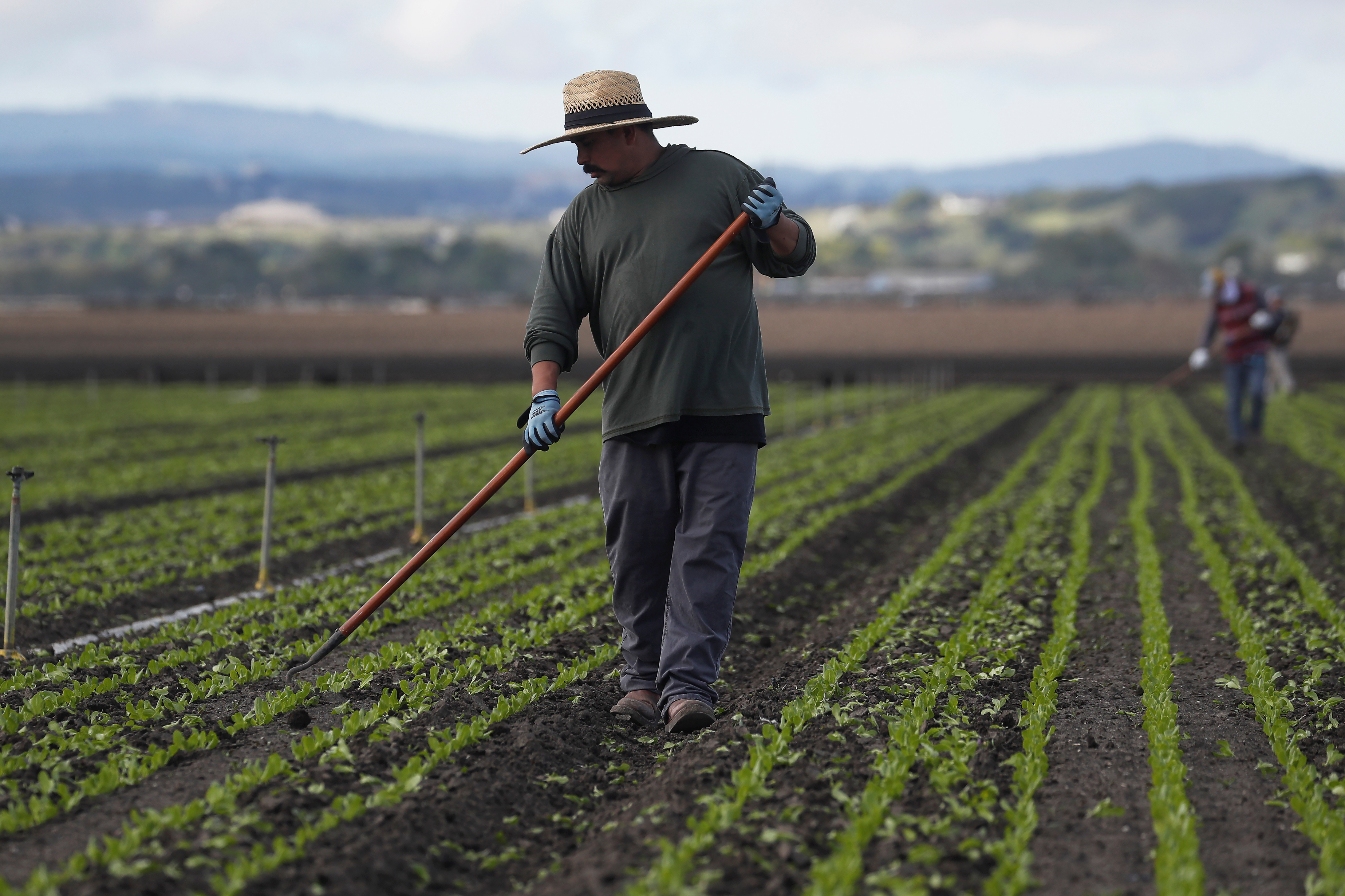Migrant worker Cesar Lopez, 33, cleans the fields amid an outbreak of the coronavirus disease (COVID-19), in the Salinas Valley near Salinas, California, U.S., March 30, 2020. Picture taken March 30, 2020. REUTERS/Shannon Stapleton